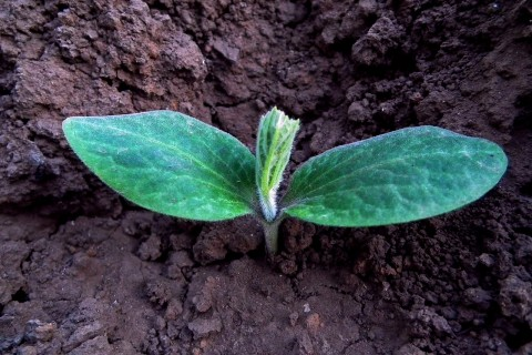 seedling with personalized nutrients